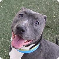 Adopt A Pet :: *DEWAYNE - Las Vegas, NV