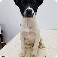 Adopt A Pet :: Kia - Patterson, NY