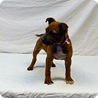 Adopt A Pet :: Shonda-020402k - Tupelo, MS