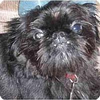 Adopt A Pet :: Matisse - Rigaud, QC