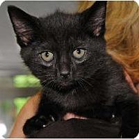 Adopt A Pet :: Shin - Monroe, GA