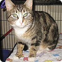 Adopt A Pet :: Autumn - Shelton, WA