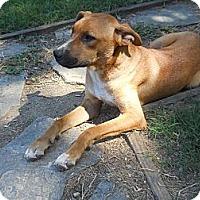 Adopt A Pet :: Chance - Charlotte, NC
