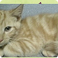 Adopt A Pet :: Garfield - Southington, CT