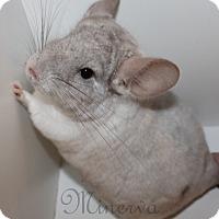 Adopt A Pet :: Daisy - Titusville, FL