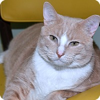 Adopt A Pet :: Carlos - Medina, OH