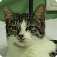 Adopt A Pet :: Muffin - Douglas, ON