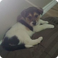 Adopt A Pet :: Coconut - Saskatoon, SK