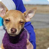 Adopt A Pet :: Hunny - Brattleboro, VT