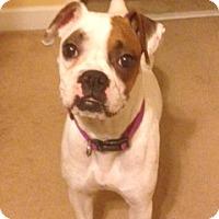 Adopt A Pet :: Penelope - Wilmington, NC
