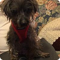 Adopt A Pet :: Peanut - The Village, FL