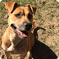 Adopt A Pet :: Honey Pot - Byhalia, MS
