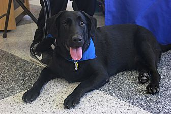 Labrador Retriever Mix Dog for adoption in Cross Roads, Texas - Cooper