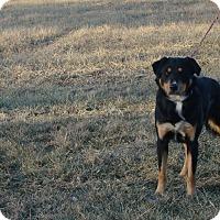 Adopt A Pet :: Porter - Cameron, MO