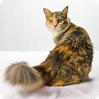 Adopt A Pet :: Trinity - Oxford, MS