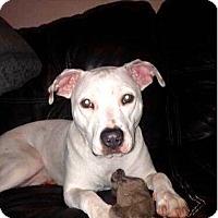 Adopt A Pet :: LYRIC - Minnesota, MN
