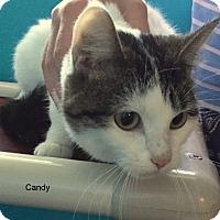 Adopt A Pet :: Candy - Hibbing, MN