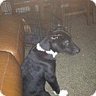 Adopt A Pet :: Spazz