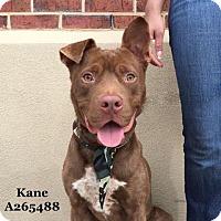 Adopt A Pet :: KANE - Conroe, TX