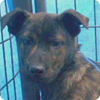 Adopt A Pet :: Bigbee - Allentown, NJ