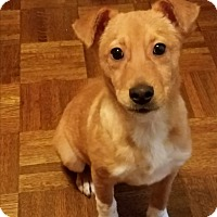 Adopt A Pet :: Nellie - Macon, GA