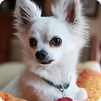Adopt A Pet :: Clyde - Matthews, NC