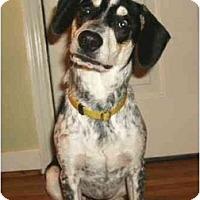 Adopt A Pet :: Petie - Mooy, AL