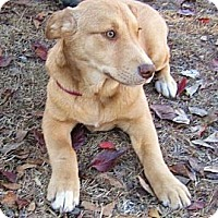 Adopt A Pet :: Godiva~ Adopted! - Carthage, MS
