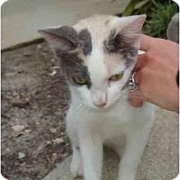 Adopt A Pet :: Alexa - Fort Lauderdale, FL