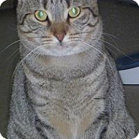 Adopt A Pet :: Pamela - Hamburg, NY
