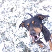Adopt A Pet :: Leroy - Lake Odessa, MI