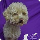Adopt A Pet :: Houlihan