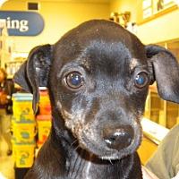 Adopt A Pet :: Tigger - Fresno, CA