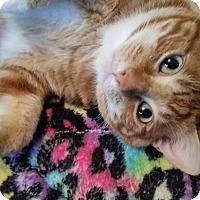 Adopt A Pet :: Toby Chubbs - San Antonio, TX