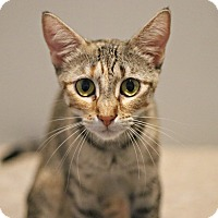 Adopt A Pet :: Emily Dickinson - Lincoln, NE