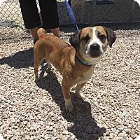 Adopt A Pet :: Ezra - Concord, NC