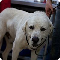 Adopt A Pet :: Pluto - Erwin, TN