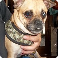 Adopt A Pet :: Smoke - Memphis, TN