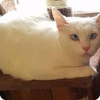 Adopt A Pet :: Anna - Addison, IL