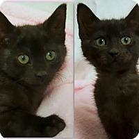 Adopt A Pet :: Mischa- RC PetSmart - Rancho Cucamonga, CA