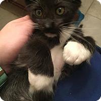 Adopt A Pet :: Khan - Gainesville, FL