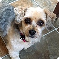 Adopt A Pet :: Sophie - Mississauga, ON