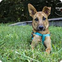 Adopt A Pet :: DeeDee - Mooresville, NC