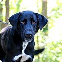 Adopt A Pet :: trapper - Edwardsville, IL