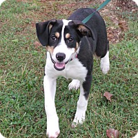 Adopt A Pet :: Lilly- ADOPTED - Somerset, KY