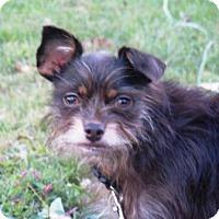 Adopt A Pet :: Marley - Washington, DC