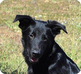 German Shepherd Dog Mix Dog for adoption in Mukwonago, Wisconsin - **BUFORD** MEET OCT 22ND!