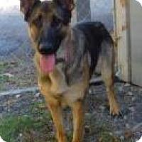 German Shepherd Dog Mix Dog for adoption in Alpharetta, Georgia - BonnieParker