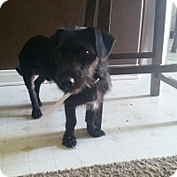Dachshund/Dachshund Mix Dog for adoption in beverly hills, California - Jordan