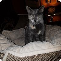 Adopt A Pet :: Scout - El Cajon, CA